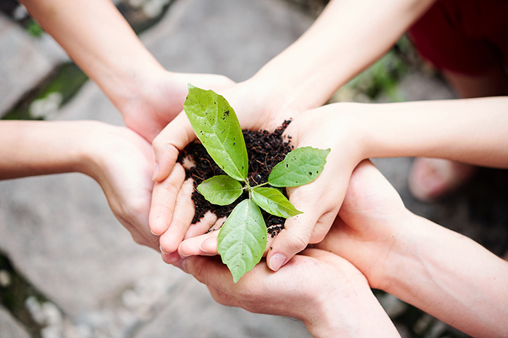 Manos sosteniendo una pequeña planta